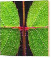 Rose Leaves Wood Print