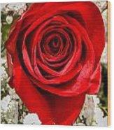Rose Macro 1 Wood Print