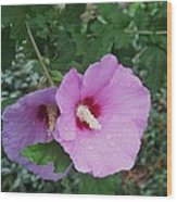 Rose Mallow Wood Print