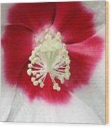 Rose Mallow - Honeymoon White With Eye 03 Wood Print