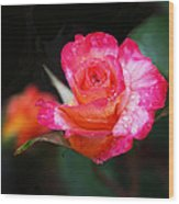 Rose Mardi Gras Wood Print by Rona Black