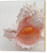 Rose Murex Seashell Wood Print