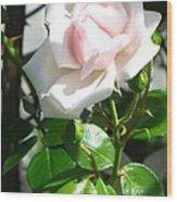 Rose Named Pearl Wood Print