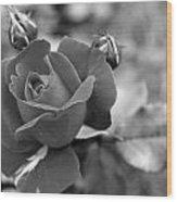 Rose Of Grace Wood Print