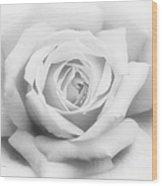 Rose Of Innocence Wood Print