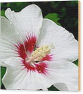 Rose Of Sharon # 1 Wood Print