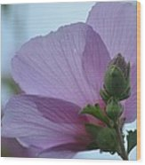 Rose Of Sharon 14-2 Wood Print