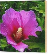 Rose Of Sharon 2 Wood Print by Mark Malitz