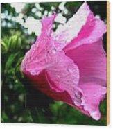 Rose Of Sharon 3 Wood Print by Mark Malitz