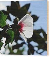 Rose Of Sharon At Dusk Wood Print