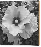 Rose Of Sharon - Detail B N W Wood Print