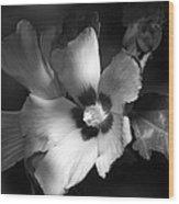 Rose Of Sharon Wood Print
