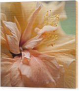 Rose Of Sharon. Hibiscus Wood Print
