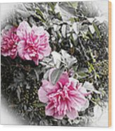 Rose Of Sharon-vintage Warmth Wood Print
