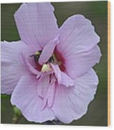 Rose Of Sharon With Bee Wood Print