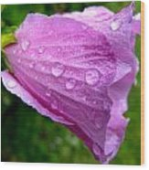 Rose Of Sharon With Rain Wood Print