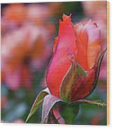 Rose On Rose Wood Print