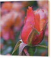 Rose On Rose Wood Print
