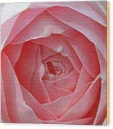 Rose Opening Wood Print