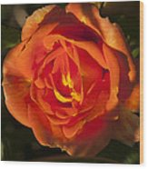 Rose Orange Wood Print