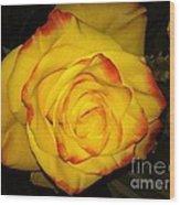 Rose Passion Yellow Impression Wood Print