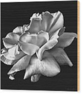 Rose Petals In Black And White Wood Print