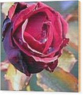 Rose Piangente Wood Print by Halina Nechyporuk