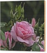 Rose Pictures 328 Wood Print