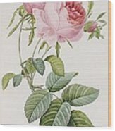 Rose Wood Print by Pierre Joesph Redoute