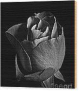 Rose Portrait Bw Wood Print