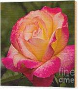 Rose Rainbow Sorbet Wood Print