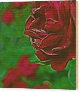 Rose Red By Jrr Wood Print