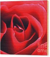 Rose Red Wood Print by Darren Fisher