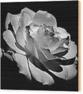 Rose Wood Print by Rona Black
