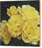 Rose (rosa 'especially For You') Wood Print