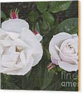 Rose (rosa 'pearl Drift') Wood Print