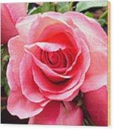 Rose Roses Wood Print