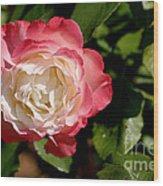 Rose Ruffles Wood Print