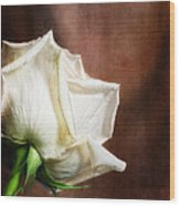 Rose - See Things Differently Wood Print