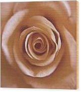 Rose Spiral 3 Wood Print by Kim Lagerhem