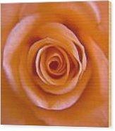 Rose Spiral Wood Print by Kim Lagerhem