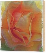 Rose Taken At Sunset  Wood Print by Daniele Smith