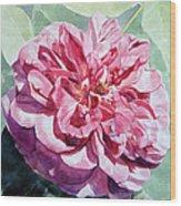 Watercolor Of A Pink Rose In Full Bloom Dedicated To Van Gogh Wood Print