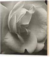 Rose White Wood Print