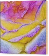 Rose With Dew Drops In Candy Colors Wood Print