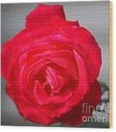 Rose_0222 Wood Print