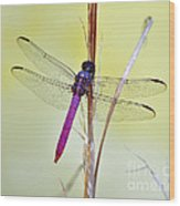 Roseate Skimmer Dragonfly Wood Print by Al Powell Photography USA