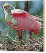 Roseate Spoonbill Adult In Breeding Wood Print