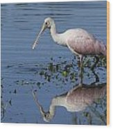Roseate Spoonbill Hunting Wood Print