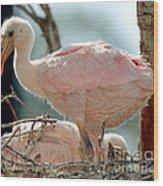 Roseate Spoonbill Nestlings Wood Print